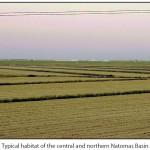 Central and Northern Basin Habitats
