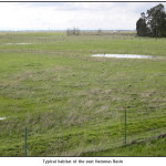 Typical habitat of the east Natomas Basin