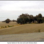 Typical habitat of the west and south Natomas Basin