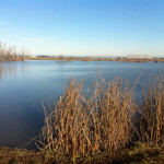 Winter view, pond