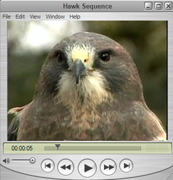 Swainson's Hawk Movie