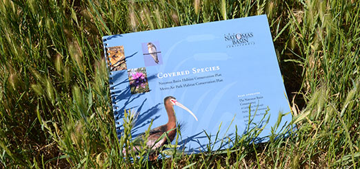 Download the 24 page Covered Species Guide