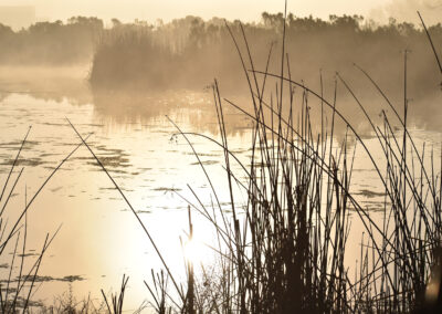 Beautiful foggy morning in the marshlands